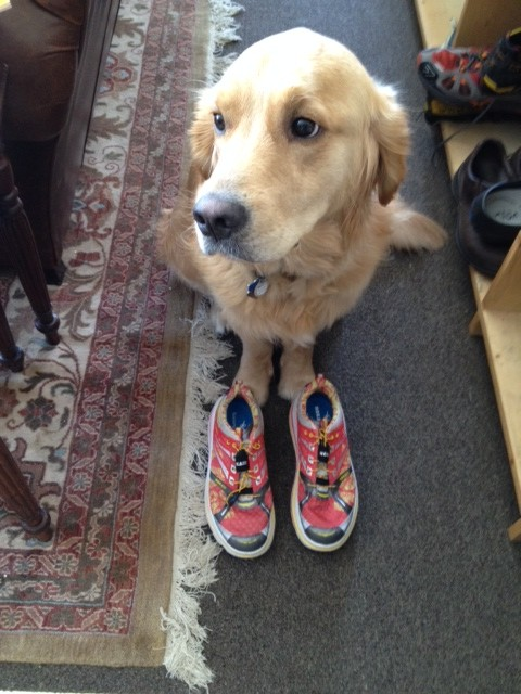 Buddy & I have been running regulary since the end of the rando season. He  is a fan of the Hoka's. This pair works great for fast transitions!