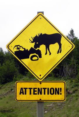 Watch out for Moose!